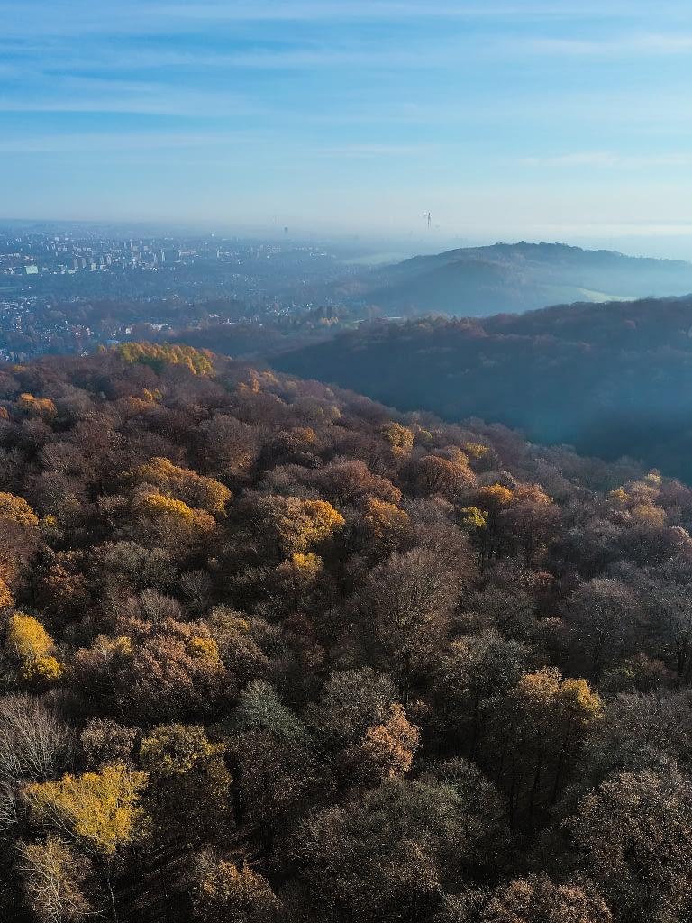 Las Wolski z widokiem na Kraków. Zdjęcie z drona późnej jesieni.